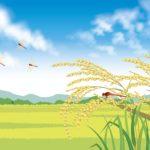 五行 占い 大阪「今は金の季節」ー心と体も収まる時期